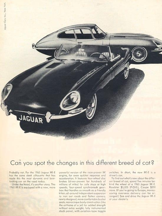 Jaguar 23